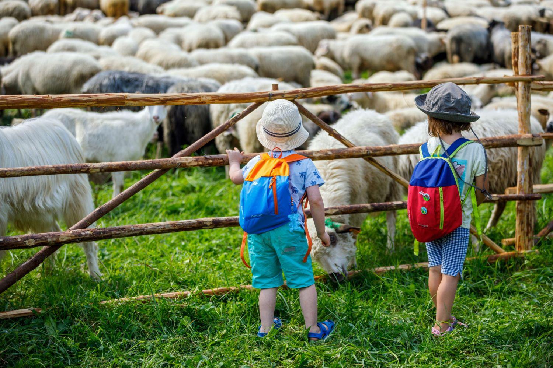 Zdjecie przedstawia dzieci obserwujące pasące sie owce